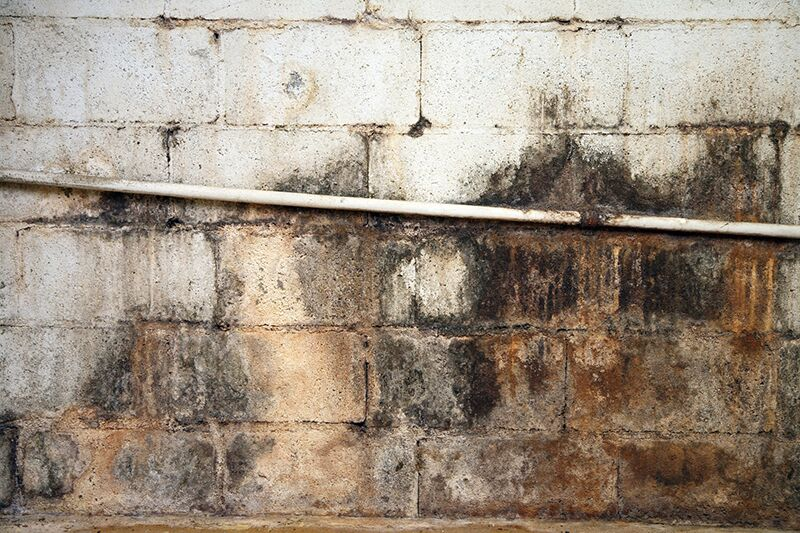 mold in the basement, insurance to protect your property from sewer backup damage